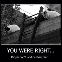 MEW-zings | 'You were right ... People don't land on their feet' #Cats #Ladders ※