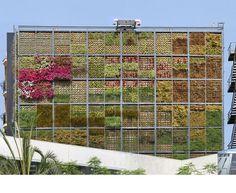 biblioteca en san vicente, españa - Library in  Spain with a vertical garden