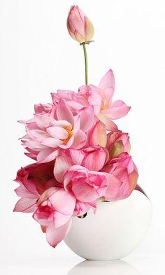 °ikebana° Kasho Maeno, magnolia flower