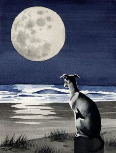 Art print (watercolor) by DJ Rogers. Looks just like my Italian Greyhound. :)