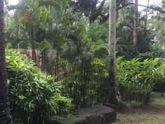 Cluster of different kind of plants at The Farm similar to Anantara