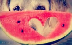 Watermelon, Fruit, Food, Meals
