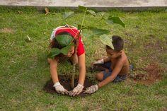 A ideia é inserir um espiral de ervas medicinais, árvores frutíferas e mudas de plantas variadas no canteiros do bairro