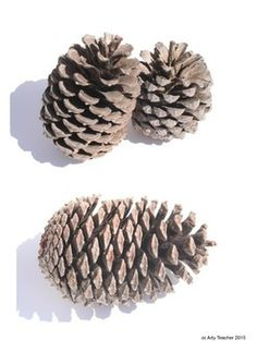 Pine Cones Drawing Resource.  Links to a great resource on Teachers Pay Teachers