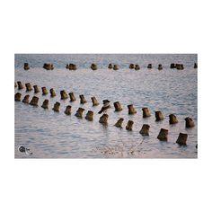 #lonely #bird @ #sunrise  #colorsofsardinia #colors_of_sardinia #andreaturno #nikontop #nikonD5000 #nikonphoto_ @andreaturno #panorama #squaready #cagliari #poetto #quartu #urban #landscape #waterscape #reflections #stories #panorama #sea #swamp