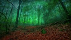 forest misty green enchantment nature leaves mist trees forests free wallpapers[1920x1080] via Classy Bro