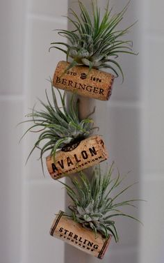 Here's a clever way to upcycle those wine corks! I've been totally infatuated with air plants lately. I mean, what's not to love about something that needs vi…