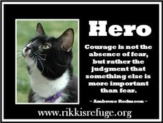 "How do you define a hero? ""Courage is not the absence of fear, but rather the judgement that something else is more important than fear."" ~~ Ambrose Redmoon ~~ Here at Rikki's Refuge, what is important is...all life!  @Rikki's Refuge @Nora Griffin Eldridge  @Donna Savory @Melissa Squires Felts @Vincent Kwek Cat"