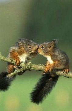 Squirrel kisses ️️