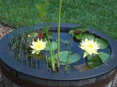 Container water garden.