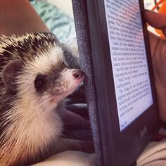 Bookish Hedgehogs Of Instagram Cuddling Hedgehogs And Cat - This instagram account will satisfy your addiction for adorable hedgehogs
