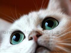 Big Green Eyes by Orava on DeviantArt