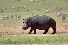 KENYA-1468_resultat