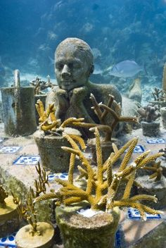 The Gardener - Underwater Sculpture by Jason deCaires Taylor