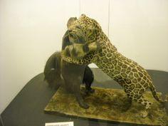 Daniela Scarel Art: Museo Civico di Storia Naturale (Milano) Part. III