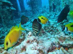 Dive ColorS 生物ブログ: 阿嘉島 安室漁礁で見た生物 14.11.07