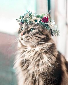 Beautiful Flower Crowns For The Most Majestic Animals – The first flower crown college professor Yarely made was for her dog, Australian shepherd Freya. Pretty Cats, Beautiful Cats, Animals Beautiful, Cute Baby Animals, Animals And Pets, Funny Animals, Kittens Cutest, Cats And Kittens, Cats Meowing