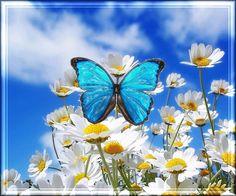20 Imágenes Animadas de Flores | Hermosas Margaritas - 1000 Gifs
