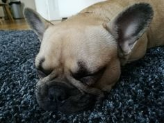 Resting bitch face? French Bulldog, Face, Dogs, Animals, Animales, Animaux, French Bulldog Shedding, Pet Dogs, Bulldog Frances