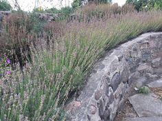 Planters, Country Roads, Mountains, Garden, Fester, Nature, Inspiration, Lavender, Biblical Inspiration