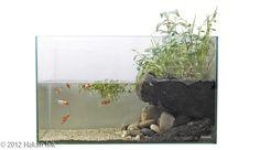 Goldfish paludarium - great  cross-section