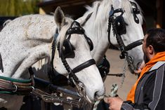 Chicago has become the latest city to ban horse-drawn carriages. (Photo by Thomas Kronsteiner/Getty Images) Animal Rights Groups, Chicago Travel, Pompano Beach, Medical Problems, Horse Drawn, Treasure Island, Salt Lake City, Humane Society, Key West