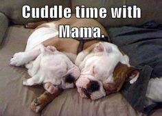 #cuddle #time #mom #puppy #dog