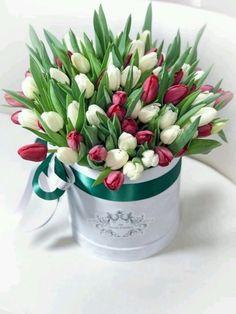 Tulips Flowers, All Flowers, Summer Flowers, Planting Flowers, Beautiful Flowers, Bloom Blossom, Blossom Flower, My Flower, Bouquet Box