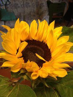 ahmare Sunflower Iphone Wallpaper, Sunset Wallpaper, Wallpaper Backgrounds, Wallpapers, Sunflower Garden, Sunflower Flower, Vincent Willem Van Gogh, Sunflowers Background, Sunflower Pictures