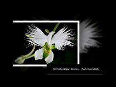Madre natura ed alcuni fiori
