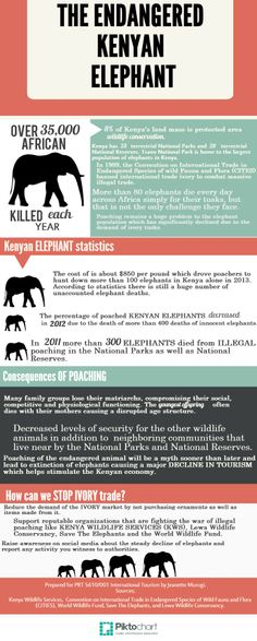 Information about the endangered Kenyan elephants
