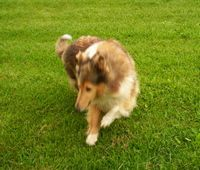 Faith at 8 years playing in the yard.