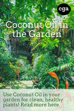 Coconut oil does it again! Be the plant parent you always wanted to be and use coconut oil to keep your garden clean and healthy!