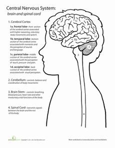 Printables High School Psychology Worksheets introduction to psychology entire unit ppts worksheets lesson inside out anatomy the brain worksheet
