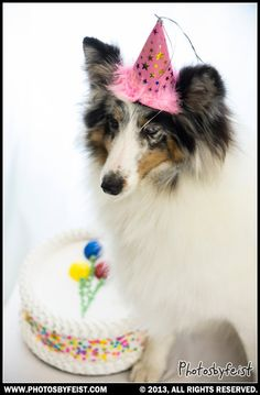 A birthday dog. Love this photo? Re-pin it!
