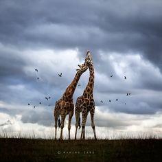 Wildscape by Marina Cano, via 500px