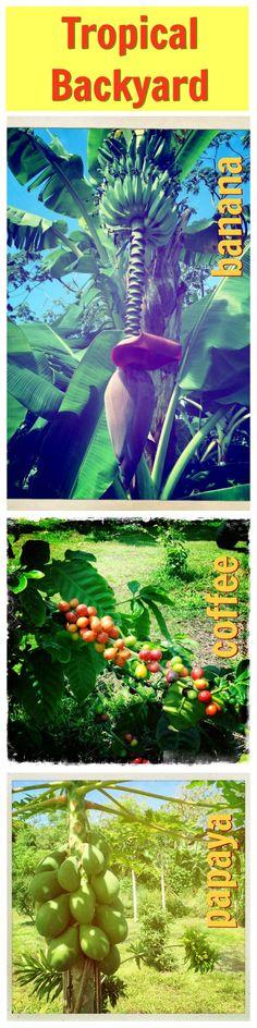 things that grown in a typical tropical backyard   http://lifequalityexaminer.com/hawaiian-lifestyle-luxury-estate-property/ #aloha #bigisland