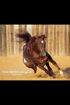 High Brow Cat - Stunning Cutting Horse Stallion