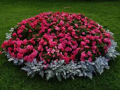 beautiful mini flowerbed