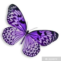 Purple Butterfly flying Isolated on white background. Stock Photo - 15652174 Stock Photo - Purple Butterfly flying Isolated on white background. Purple Butterfly Tattoo, Butterfly Drawing, Butterfly Painting, Butterfly Crafts, Butterfly Wings, Purple Butterfly Wallpaper, Butterfly Colors, Butterfly Tattoos For Women, Butterfly Clip Art