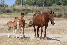Kos, Greece, Horses, Island, Animals, Greece Country, Animales, Animaux, Horse