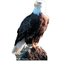 Eagle Stand-Up - OrientalTrading.com $26.00