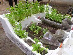 Como cultivar uma horta orgânica em casa   Cura pela Natureza.com.br