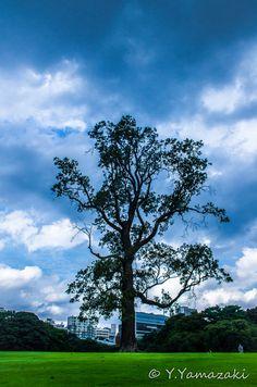 A big tree  by Youhei Yamazaki, via 500px
