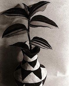 Floral still life by Imogen Cunningham and Kris Scholz. Imogen Cunningham lived from 1883 to 1976. Kris Scholz has 1952. The American Cunningham is one of the 'classics' of modern photography of the 20th Century. In 1932 she co-founded with Ansel Adams Edward Weston and others, the Group f/64. Aperture 64 was the program of the group: all sharp, all details visible. Cunningham also took pictures of people like James Cagney, Cary Grant or Upton Sinclair. His favorite object, however, was…