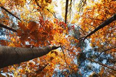 Fall Color At Ohiopyle State Park