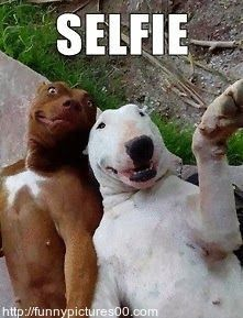 Dog pictures with funny captions ~ Funny Pictures and wallpapers http://funnpictures00.com #funnydogwithcaptions