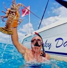 OBTAIN YOUR LOBSTER LICENSES FOR MINI-SEASON AND ALWAYS FOLLOW RULES FIND TIPS ONLINE During the two day mini- season 2013 in the Florida Keys, about 270k lobsters will be captured