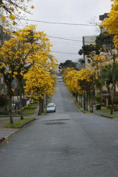 Rua | Curitiba