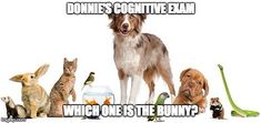 ANimals | DONNIE'S COGNITIVE EXAM WHICH ONE IS THE BUNNY? | image tagged in animals | made w/ Imgflip meme maker